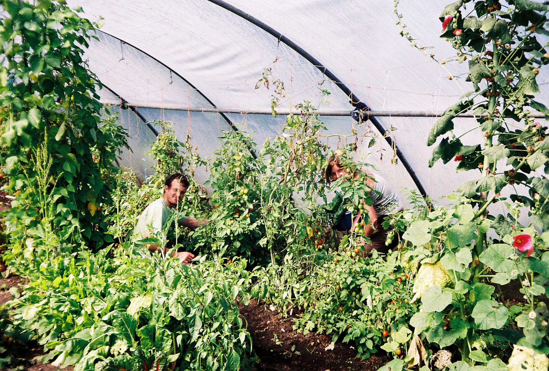 Krsnadeva and Willa working in the poly tunnel