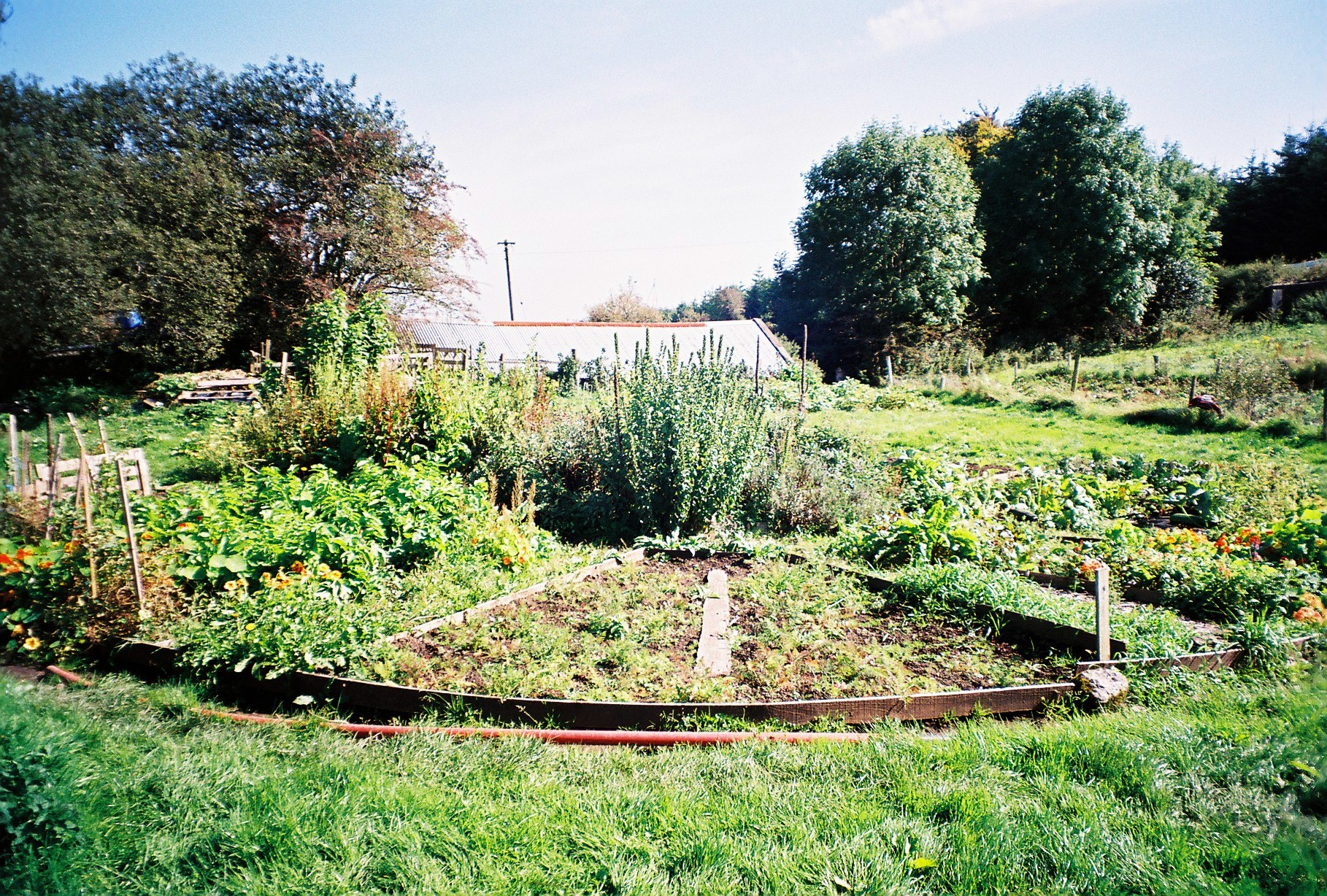 patches of vegetables and flowers