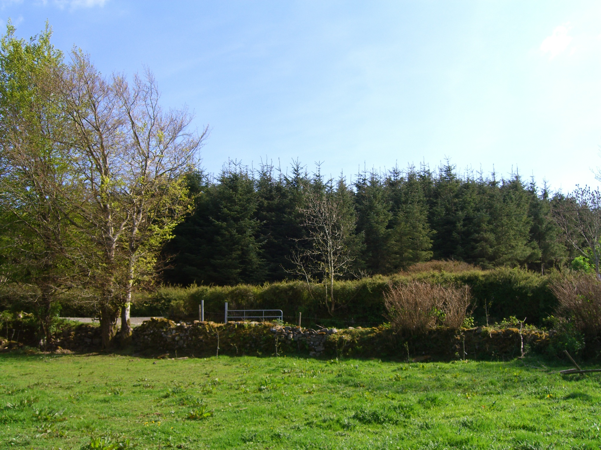 A view over the field (gate and path towards the house)
