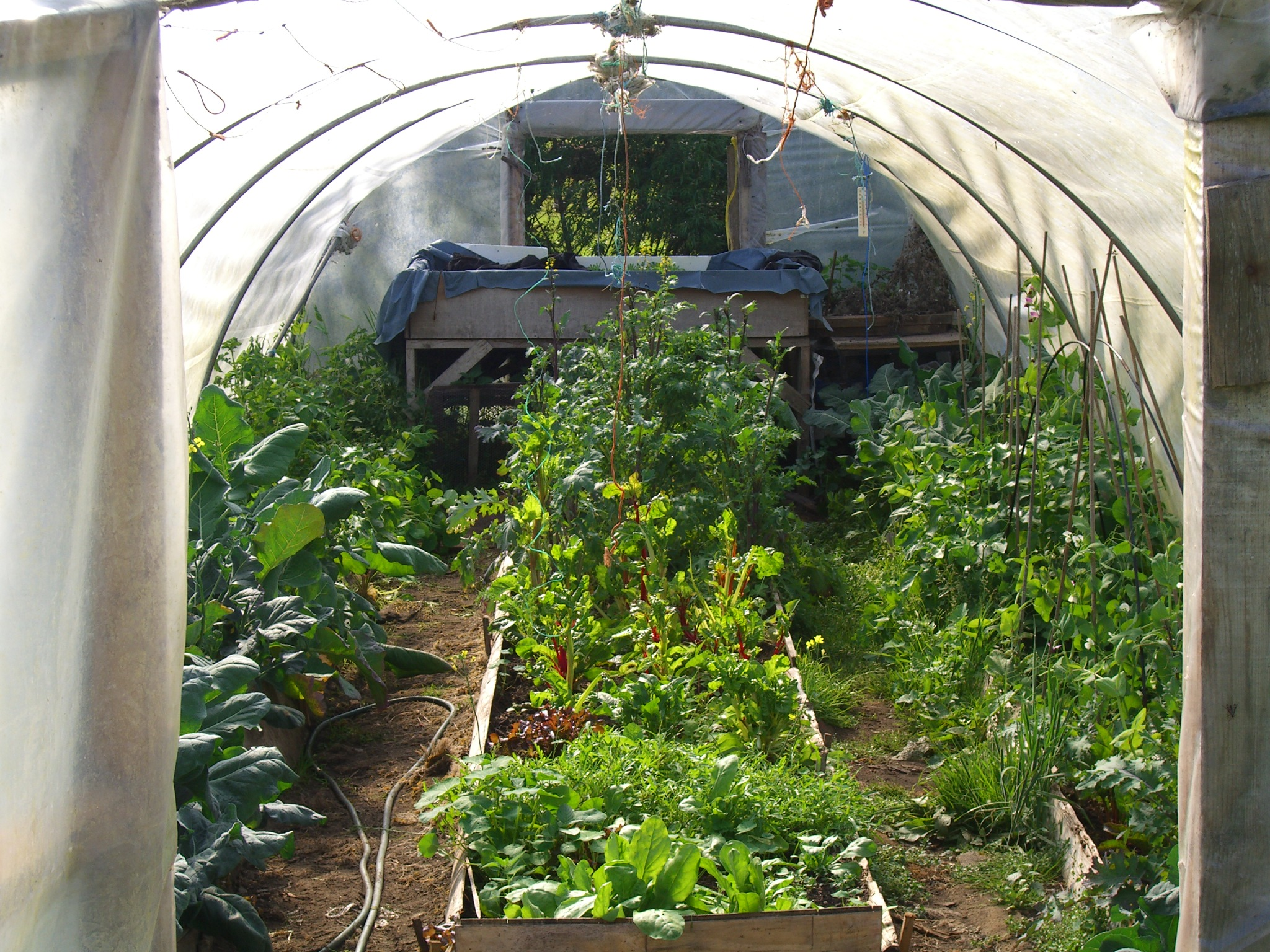 inside poly tunnel