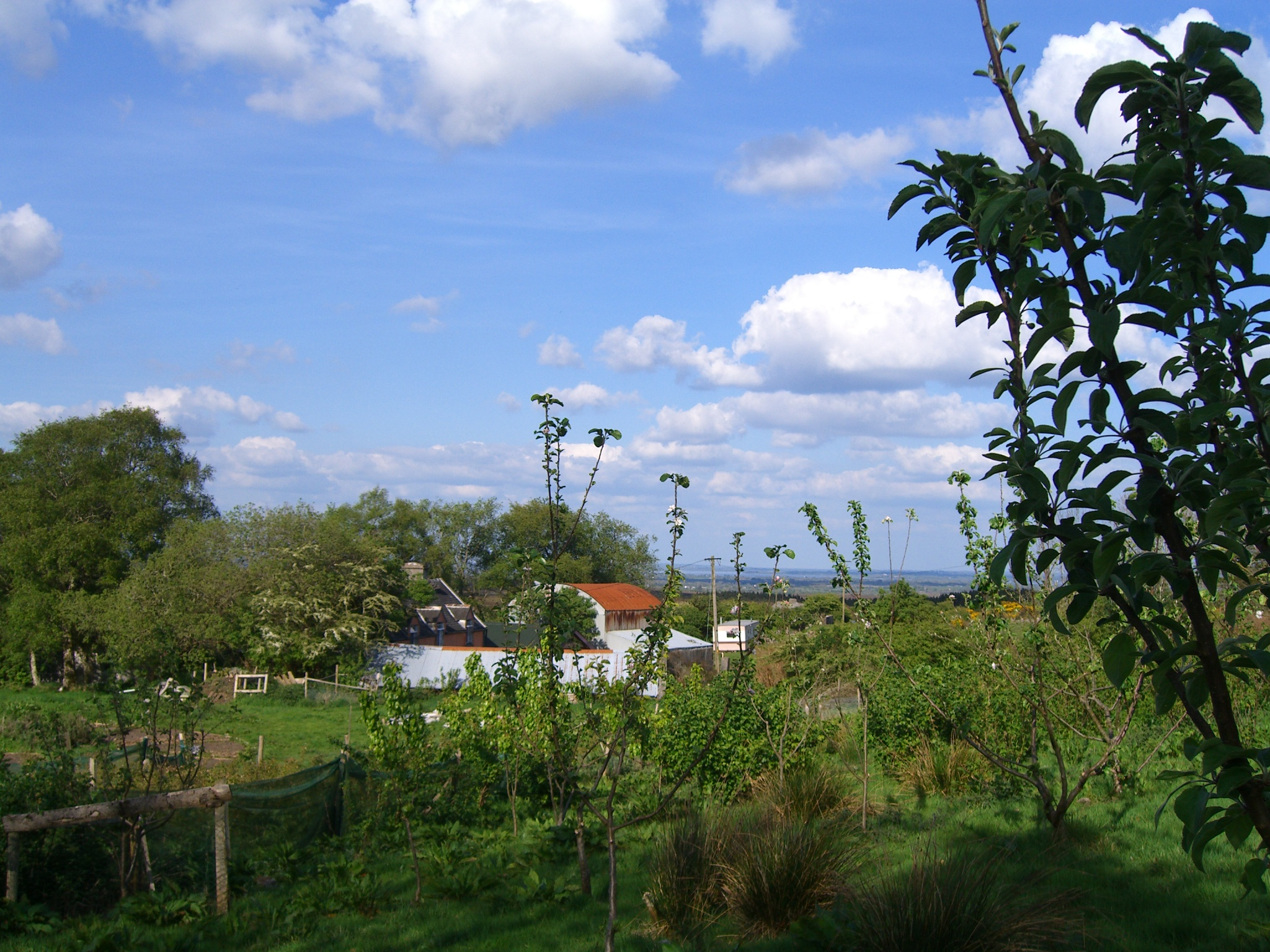 A view through the young orchard
